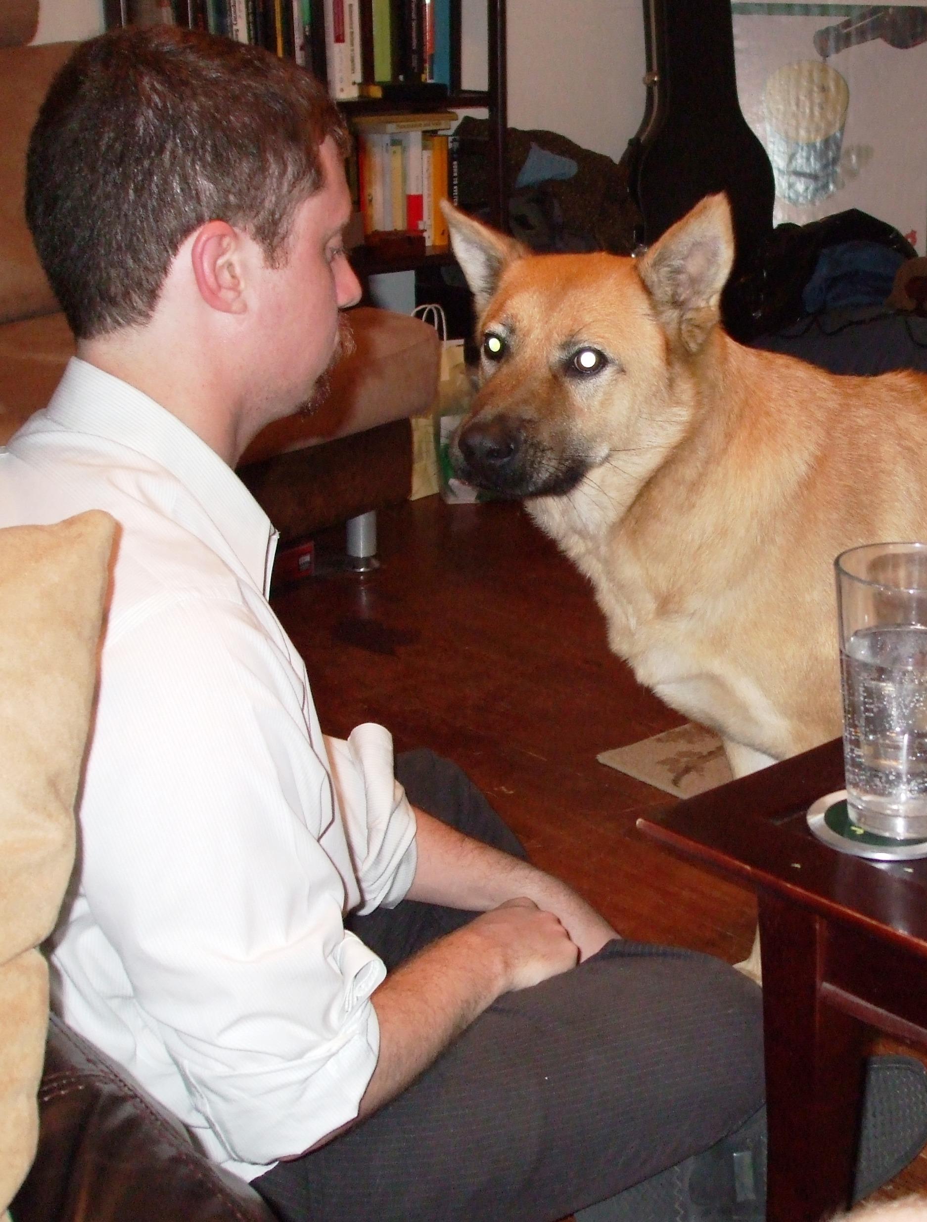 Half Dog Half Person - photo#30
