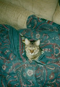 Orwell in a blanket